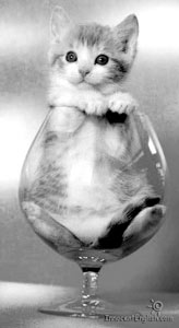 a kitten in a wine glass doesN#t care about partizipialkonstruktion